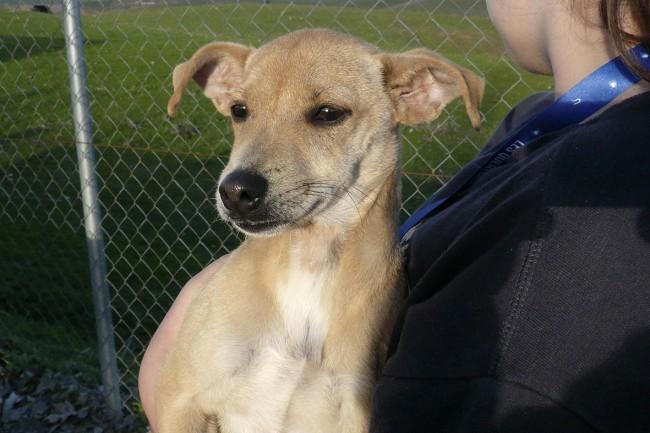 Popi Asis- Perros en adopcion en Asociacion ALBA