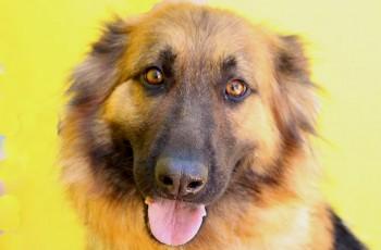 Asociación Alba Protectora De Animales En Madrid Adopta A Un Perro